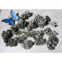 Black Curly Lichen 1.5 cu ft