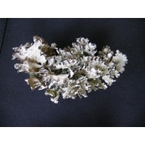 Black Curly Lichen 1.0 cu ft