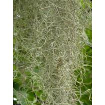 Spanish Moss 5 lb